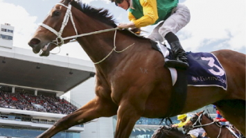 Blog images x 6_flemington horse